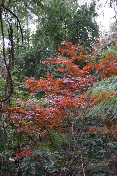 Love Autumn colours